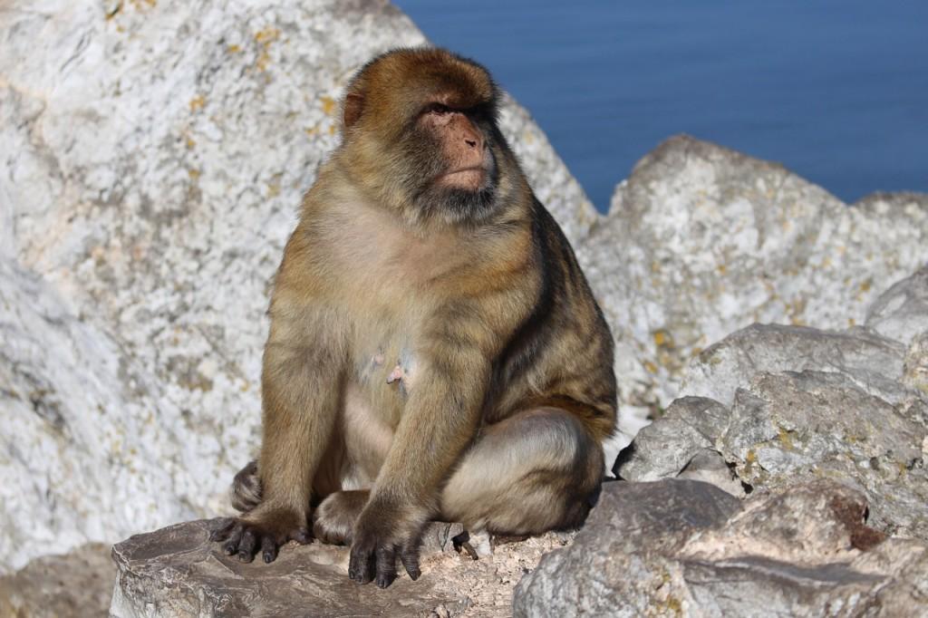 monkey-853263_1280