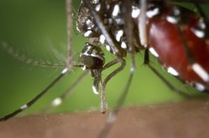 mosquito-1301764_1280