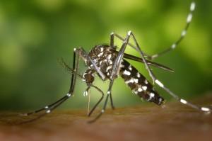 【2016最新】蚊対策最強グッズ!感染症とアレルギーを予防!